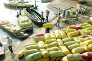 Lo cho xuất khẩu lúa gạo