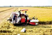 Quy hoạch, tái cơ cấu sản xuất lúa bền vững