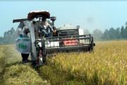 TP Cần Thơ chuyển đổi sản xuất lúa gạo bền vững